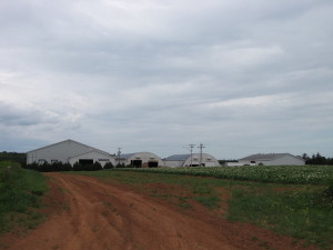 Farm shots 008 vanco